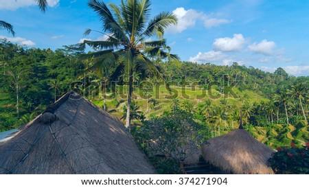 Famous rice terraces near Ubud in Bali, Indonesia - stock photo