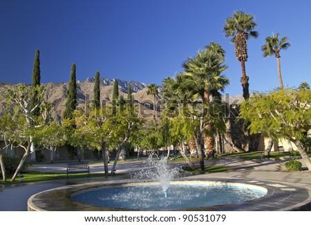 Fan Palms Trees Blue Fountain Palm Springs California washingtonia filifera - stock photo