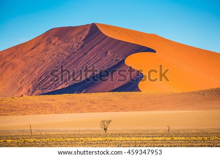 Fancifully curved sharp crests of orange dunes. Travel to Namibia. Namib-Naukluft National Park