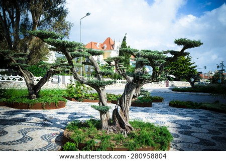 Fancy tree in a city park. Portugal. Toned. - stock photo
