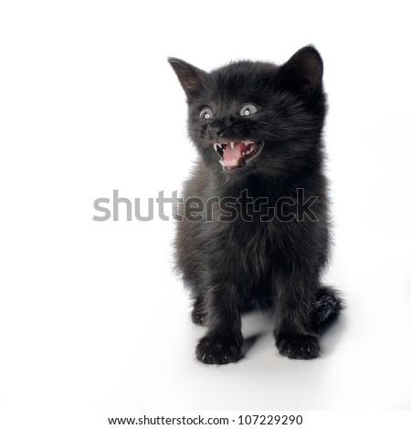 Fanny black kitten isolated on white background - stock photo