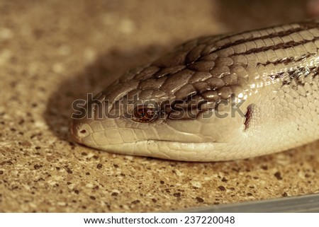 fantastic close-up portrait of tropical snakes. Selective focus, shallow depth of field. - stock photo
