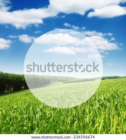 Fantastic closeup green grass on the field. Ukraine, Europe. Beauty world. Creative design. Write your text. - stock photo