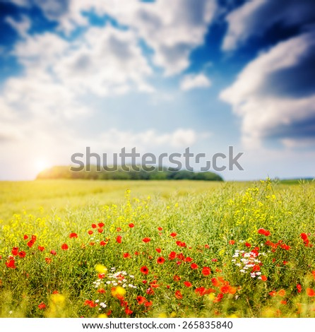 Fantastic closeup sunny grass and red poppies. Dramatic unusual scene. White cumulus clouds. Ukraine, Europe. Beauty world. - stock photo
