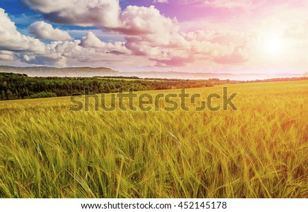 Fantastic field of wheat at sunset. Colorful cloudy skies and bright sun. Photos of nature. Idea concept rich harvest. Beauty in the world - stock photo