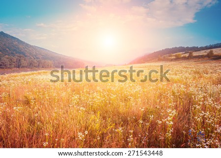 Fantastic foggy river with fresh grass in the sunlight. Dramatic unusual scene. Warm sundown on Dnister. Ukraine, Europe. Beauty world. Retro and vintage style, soft filter. Instagram toning effect. - stock photo