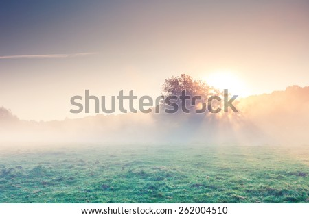 Fantastic foggy river with fresh green grass in the sunlight. Dramatic colorful scenery. Seret river, Ternopil. Ukraine, Europe. Beauty world. Retro style filter. Instagram toning effect. - stock photo