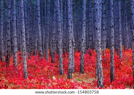 Fantastic forest with Cotinus coggygria. Autumn leaves. Crimea, Ukraine, Europe. Beauty world. - stock photo