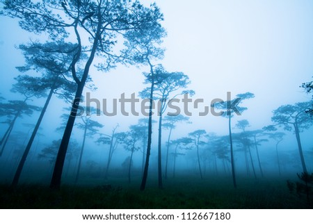 Fantastic forest with mist - stock photo