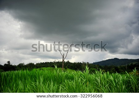 Fantastic green field and alone tree at the dramatic overcast sky.