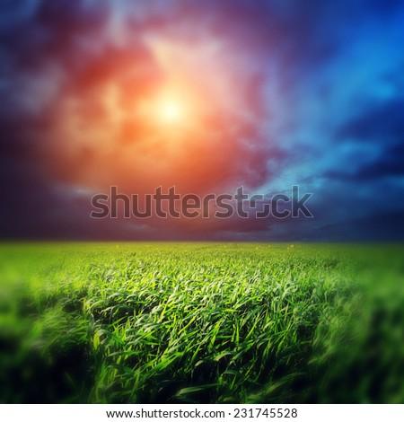 Fantastic green field at the dramatic overcast sky. Ukraine, Europe. Beauty world. Retro style filter. Instagram toning effect. Tilt Shift blur effect. - stock photo