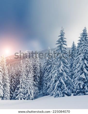 Fantastic landscape glowing by sunlight. Dramatic wintry scene under blue sky. Carpathian, Ukraine, Europe. Beauty world. Retro filter. Instagram toning effect. Happy New Year! - stock photo