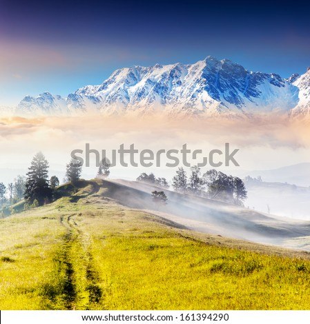 Fantastic sunny day is in mountain landscape. Carpathian, Ukraine, Europe. Beauty world. - stock photo