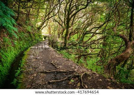 fantastic trekking footpath in levada Caldeirao Verde, Madeira - stock photo