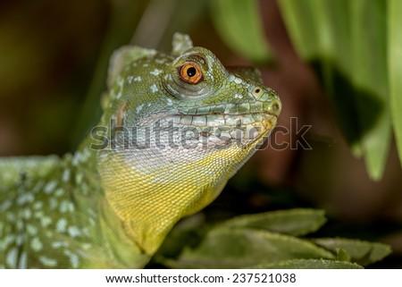 fantastic tropical macro green iguana eye. Selective focus on eye - stock photo