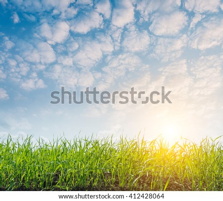 Fantastic view of the summer field and sunlight in blue sky. Picturesque and gorgeous scene. Location place Ukraine, Europe. Artistic picture. Beauty world. - stock photo