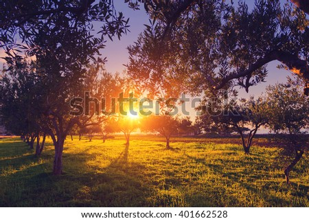 Fantastic views of the garden which glowing by sunlight at twilight. Mediterranean climate. Dramatic and picturesque scene. Location place Sicily island, Italy, Europe. Artistic picture. Beauty world. - stock photo