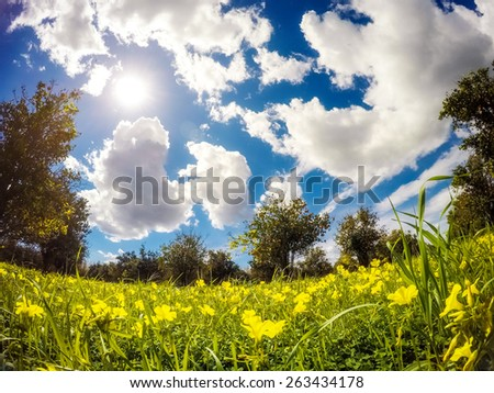 Fantastic views of the garden with blue sky. Mediterranean climate. Sicily island, Italy, Europe. Beauty world. Taken with GoPro 4. - stock photo