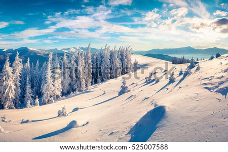 Fantastic winter morning in Carpathian mountains with snow covered fir trees. Colorful outdoor scene, Happy New Year celebration concept. Artistic style post processed photo.