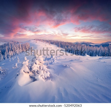 Fantastic winter sunrise in Carpathian mountains with snow covered fir trees. Colorful outdoor scene, Happy New Year celebration concept. Artistic style post processed photo.