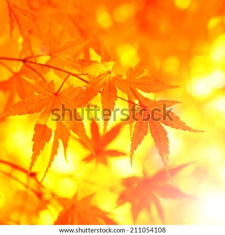 Fantasy acer autumn tree leaves background. - stock photo
