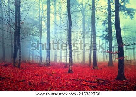 Fantasy autumn color forest scene.  - stock photo