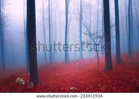 Fantasy blue and red autumn season foggy forest scene. - stock photo