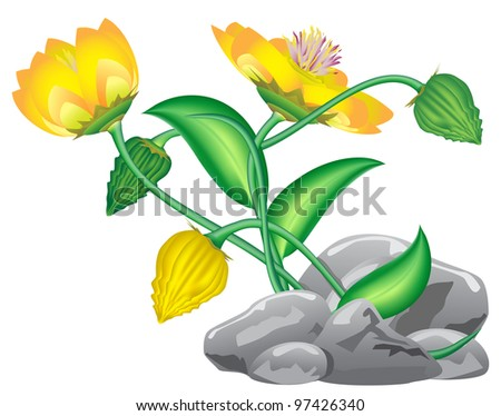 fantasy flower growing from rocks isolated on white - stock photo