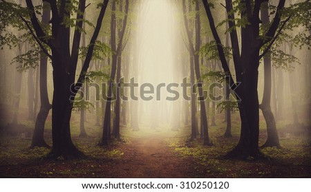 Fantasy forest. Symmetry inside the fog - stock photo