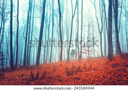 Fantasy forest trees with orange red colored leaves on the woods floor. - stock photo