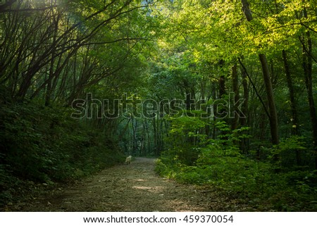Fantasy landscape with a green tunnel of illuminated trees on a forest path