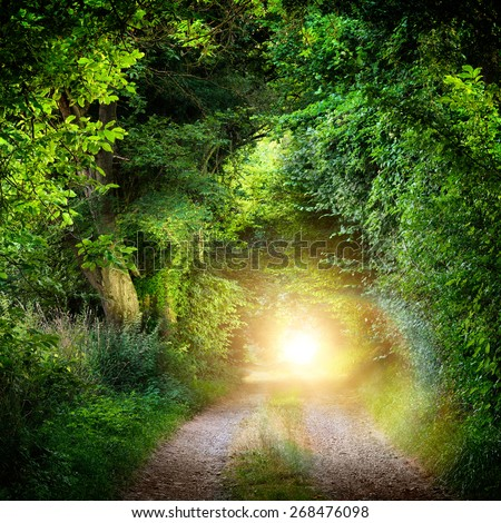 Fantasy landscape with a green tunnel of illuminated trees on a forest path leading to a mysterious light. Brightly lit outdoor night shot. - stock photo