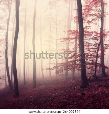 Fantasy marsala color foggy woodland. Beautiful marsala color in misty forrest. Marsala color used. - stock photo