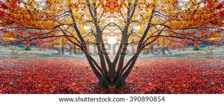 Fantasy mirrored red tree during sunset - stock photo