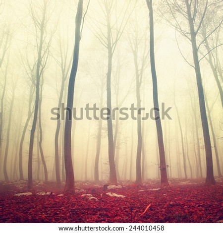 Fantasy morning yellow red color foggy beech forest. Color filter effect used. - stock photo
