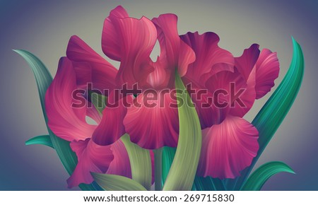 Fantasy Red Passion Iris for design of posters, banner, birthday cards, greetings, cover, magazines and other. Original style of unique flower. Beauty and fresh spring collection. - stock photo