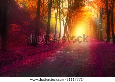 fantasy scene in autumn park with sun rays and colorful leaves on road - stock photo