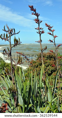 Farewell Spit vertical panorama at low tide located at the very top of the South Island, New Zealand. Photo taken from the restaurant at Puponga. Flax bushes and flowers in the foreground. - stock photo