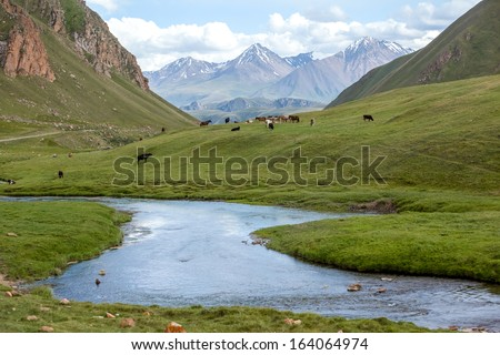Farm animal feeding at river, Tien Shan mountains, Kyrgyzstan - stock photo
