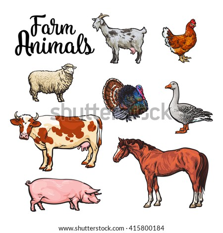 Farm animals, cow, pig, chicken, goose, poultry, livestock color illustration, Sketch style with a set of animals isolated, realistic animal products for sale, Horse and goat turkey, sheep animals set - stock photo