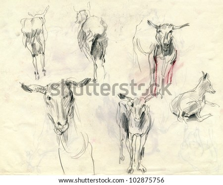 Farm animals hand drawing pencil technique one animal has a couple of moves