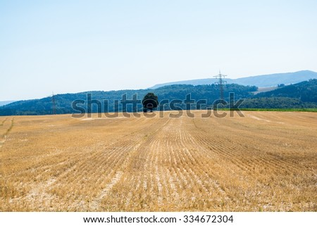 Farm Barley on the hill in Harvest