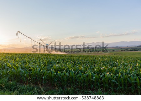 Farm Crops Water Sprinklers Farming young crops of maize corn planted with water sprinklers summer field landscape.