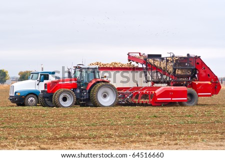 Farm equipment harvesting sugar beets and loading them into a semi-truck. - stock photo