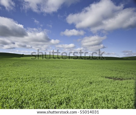 Farm field rolling hills in the background with fluffy clouds. - stock photo