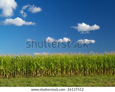 Farm field under the blue cloudy sky - stock photo