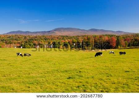 Farm field with a couple of cows, Stowe, Vermont, USA - stock photo