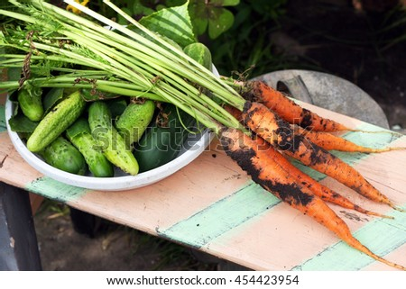 Farm fresh carrots and cucumbers, freshly picked from the garden.