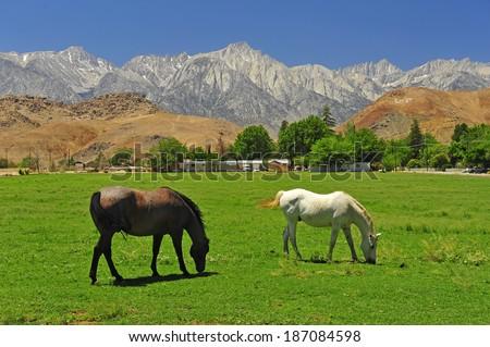 Farm Horse - stock photo