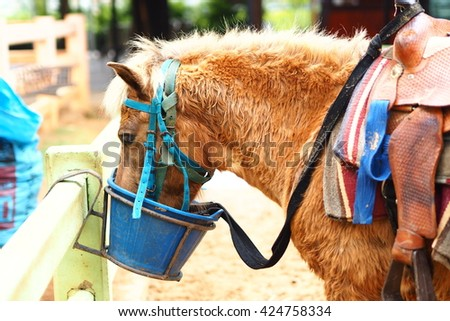 Farm Horse eating in the bucket. - stock photo
